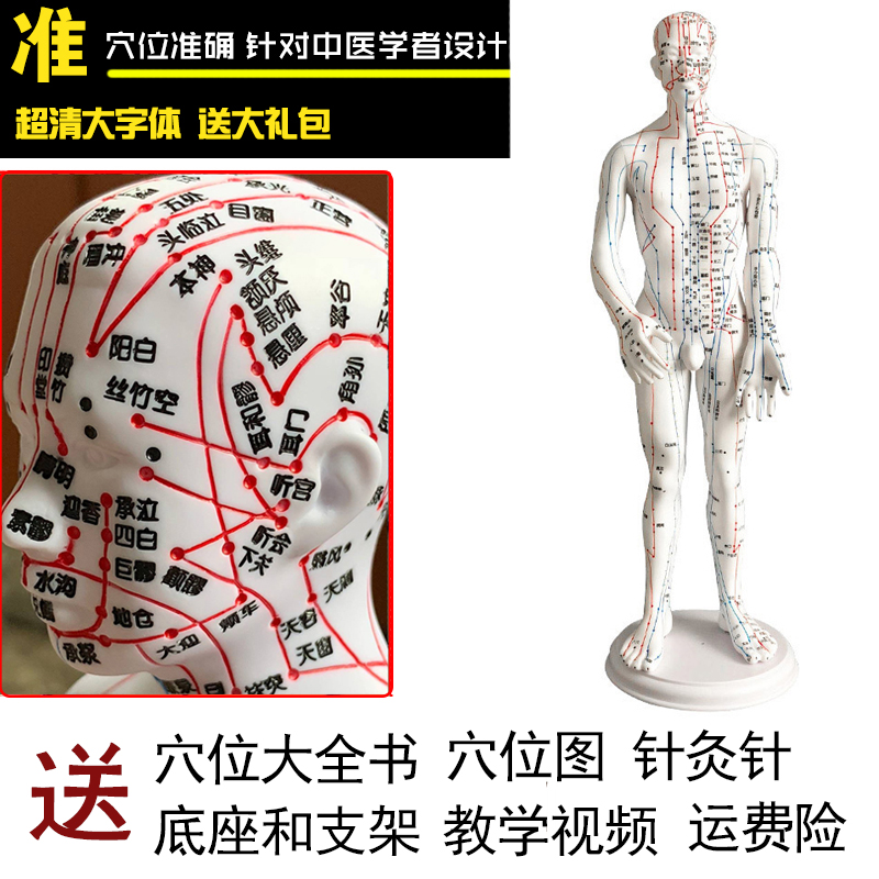 White Male Model Hard Clear (hand Can Be Turned) 50cm Medical Characters