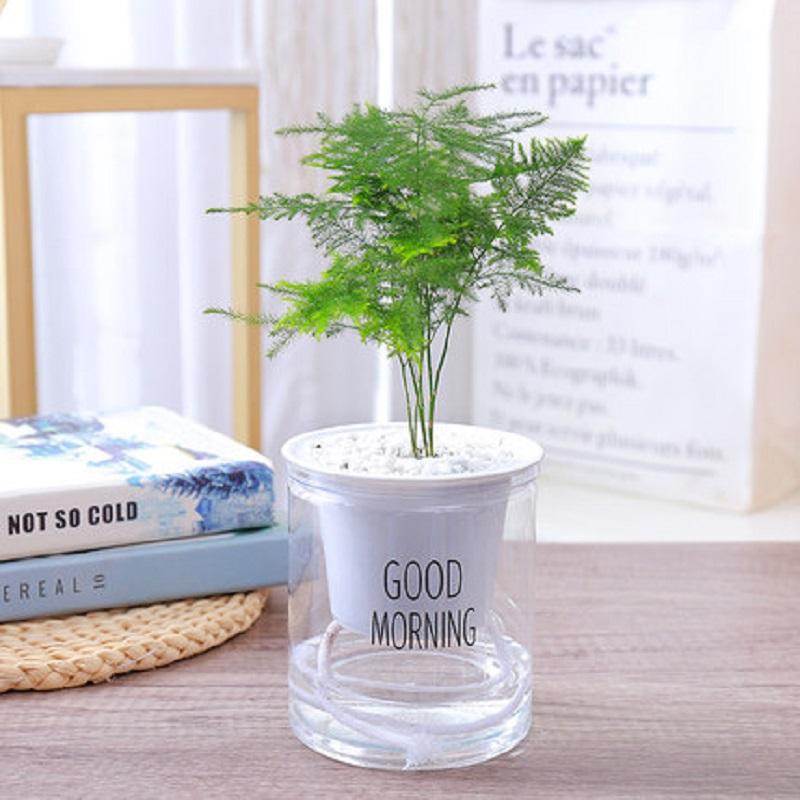 办公室绿植水培带盆栽好防辐射早安盆栽室内花卉植物易养开花四季