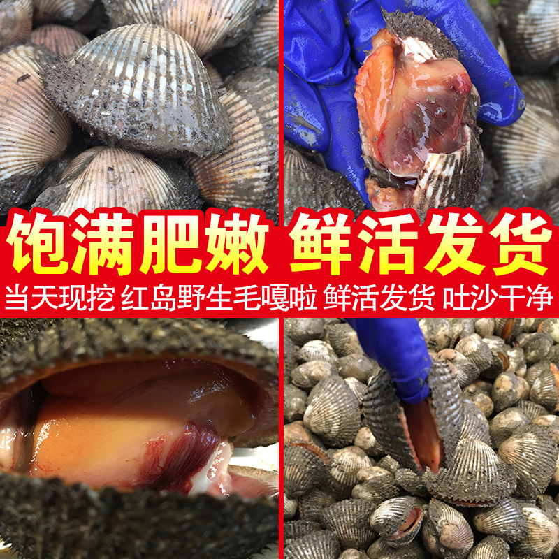 Asian bushy clam
