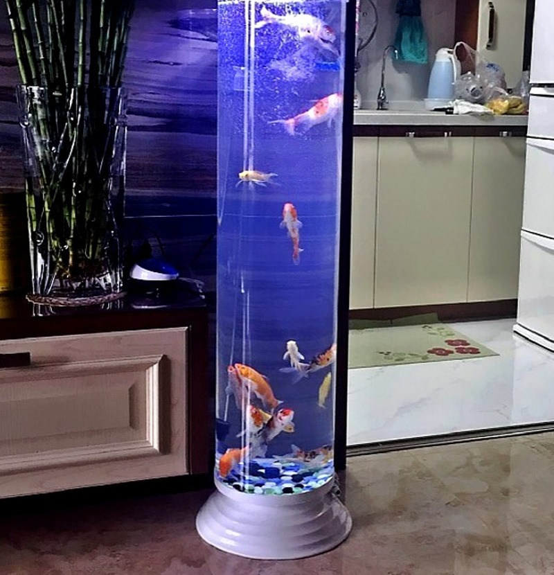 Usd knorr chef of the cylindrical fish tanks for Floor fish tank