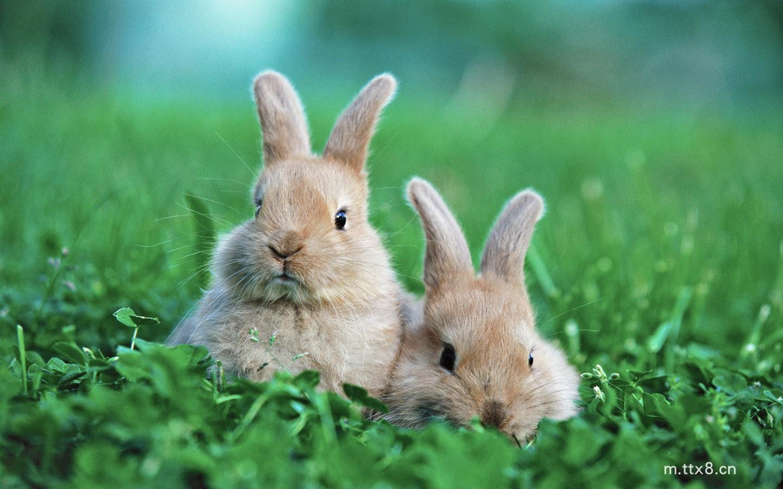 兔子情侣桌面壁纸(1440x900).jpg
