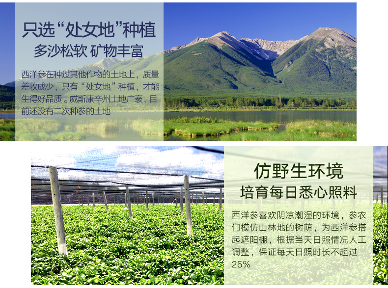 北京同仁堂 美國西洋參片 4# 90g 6980