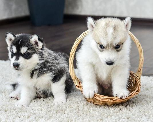 """拥有""""渣""""之称6大狗狗,你家的上榜没10"""