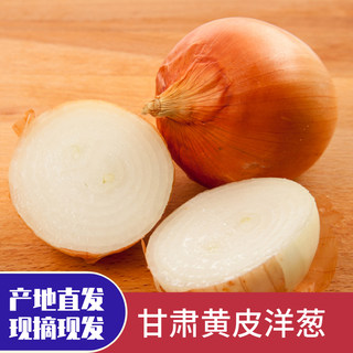 Gansu yellow skin onion 5 pounds fresh onion head yellow skin fruit onion farm vegetables non-purple onion small onion head