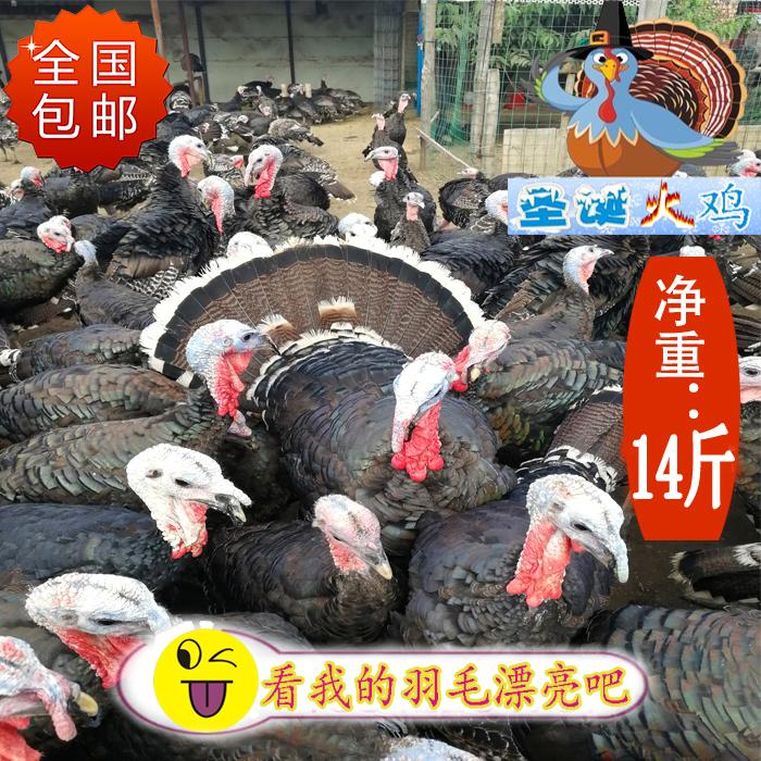 2020年 圣诞感恩节火鸡肉整只7000g 新鲜 冷藏 牧草谷物生态饲养
