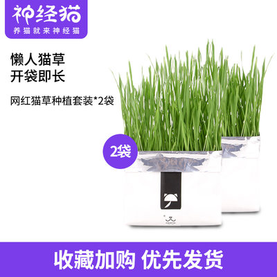 Wika Net Red Cat Grass Catnip Seed Soil Potted Soil Cultivation Planting Set Hair To Hair Ball Snacks 2 Boxes