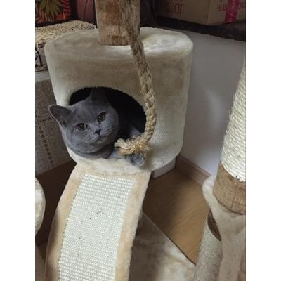 Export Japan large cat climbing frame Cat litter Cat tree Cat ...