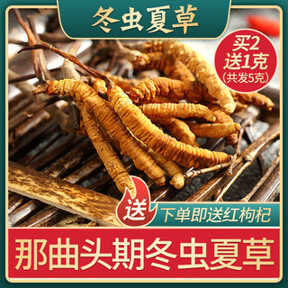 Tibet that song winter worm summer grass genuine 5 to 6 roots / g authentic wild insect grass dry goods 2g loose gift boxed fresh
