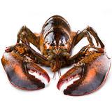 味库海鲜 鲜活波士顿龙虾 450g-550g/只 死亡包赔 拍2只;278元包顺丰冷链 经核酸检测