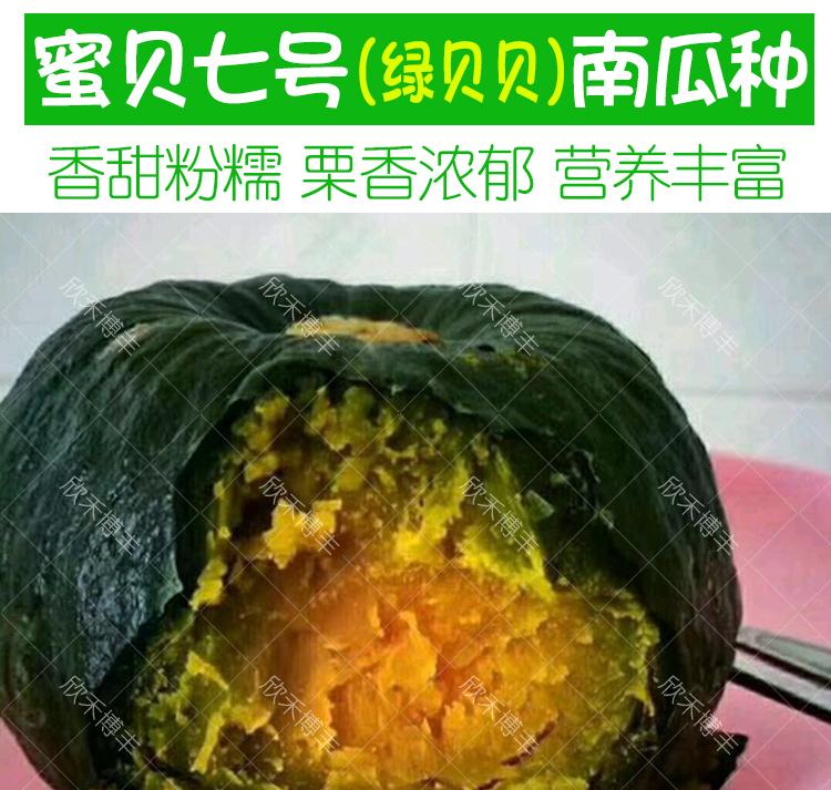 日本板栗味绿贝贝南瓜种籽春季甜糯小南瓜种子四季菜种籽蔬菜种孑详细照片