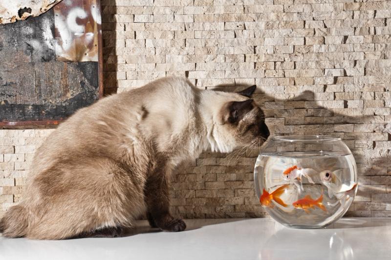 现在的年轻人喜欢养鱼?是因为这些