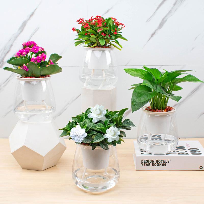 绿萝发财树水培绿植盆景室内办公室花卉懒人桌面盆栽小植物栀子花