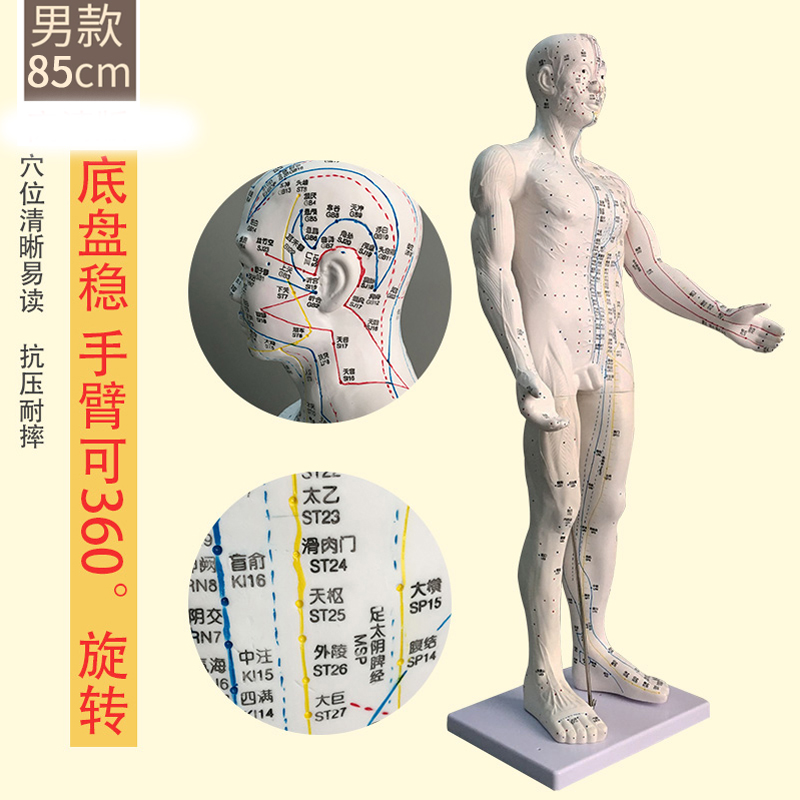 White Male Hard Mold Super Clear (hand Can Be Turned) 85cm Medical Characters