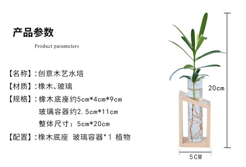 包邮绿萝竹柏罗汉松创意水培摆件带植物发货小椰树木艺玻璃瓶摆件详情图