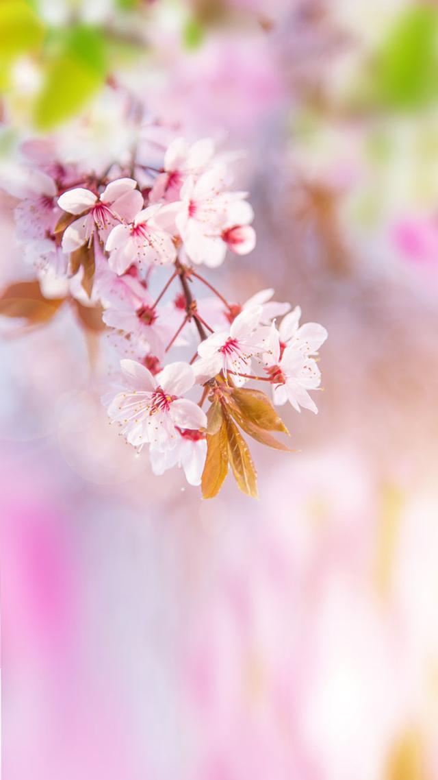 日本追樱全攻略从南到北赏遍最美