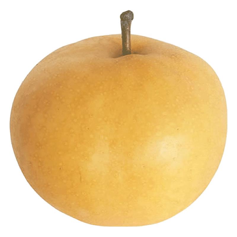客聚多梨子莱阳丰水梨五斤 脆甜新鲜水果非新高砀山酥梨香梨雪梨