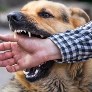 """看着温和的狗狗,还会突然""""咬""""人一口"""