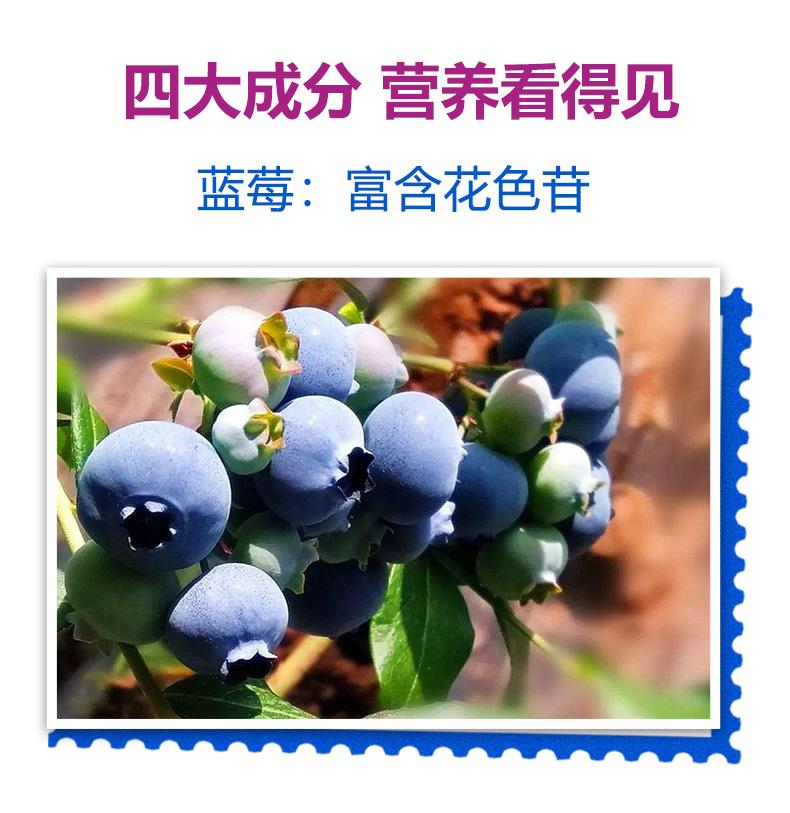 蜀中儿童学生青少年成人蓝莓咀嚼片