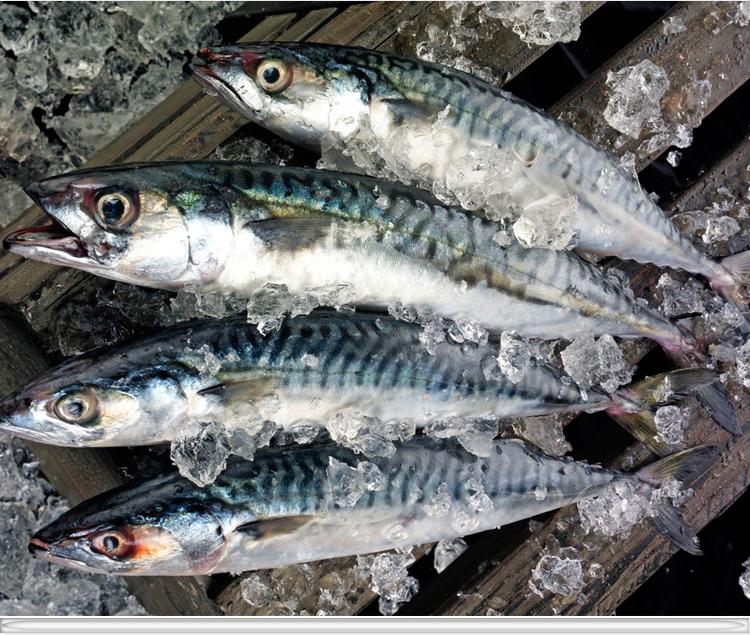 青鱼鱼v青鱼挪威好运鲭鱼鲜活冻鲐鱼龙行青花京深店