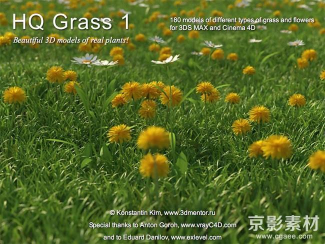 HQ Grass 1 for Cinema4D-226个花草植物C4D模型Cinema4D模型