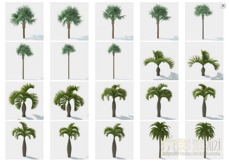 HQ Palms 1 for C4D-280个海岛风情树种C4D模型Cinema 4D模型