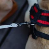 Сяо Пей собака поводка собака цепь большой средний и маленький собака общий разумный анти-потерял золотые волосы собака собака веревку воротник