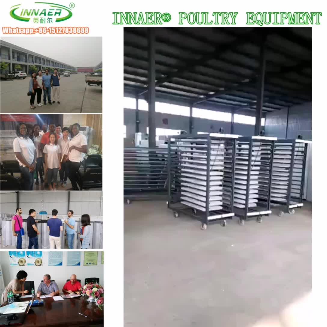 2014 penjual pasar telur puyuh inkubator di qatar untuk unggas