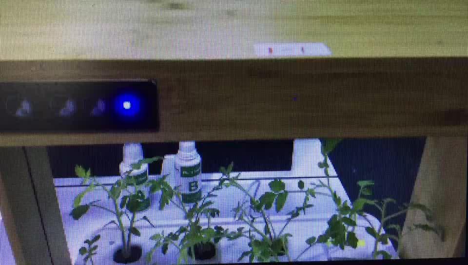 Semente Bandeja De Viveiro de Plantas lâmpada led indoor sistema hidropônico fodder de Bambu bandeja