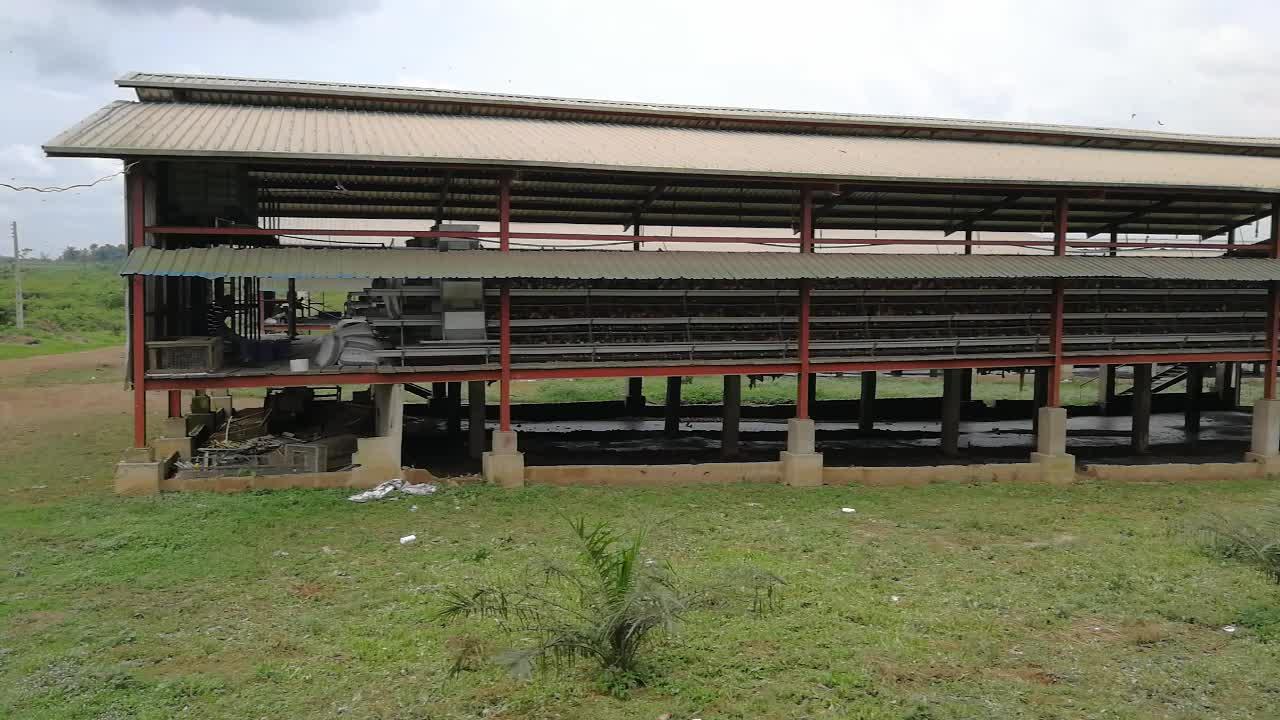 Cages à volaille pour le kenya