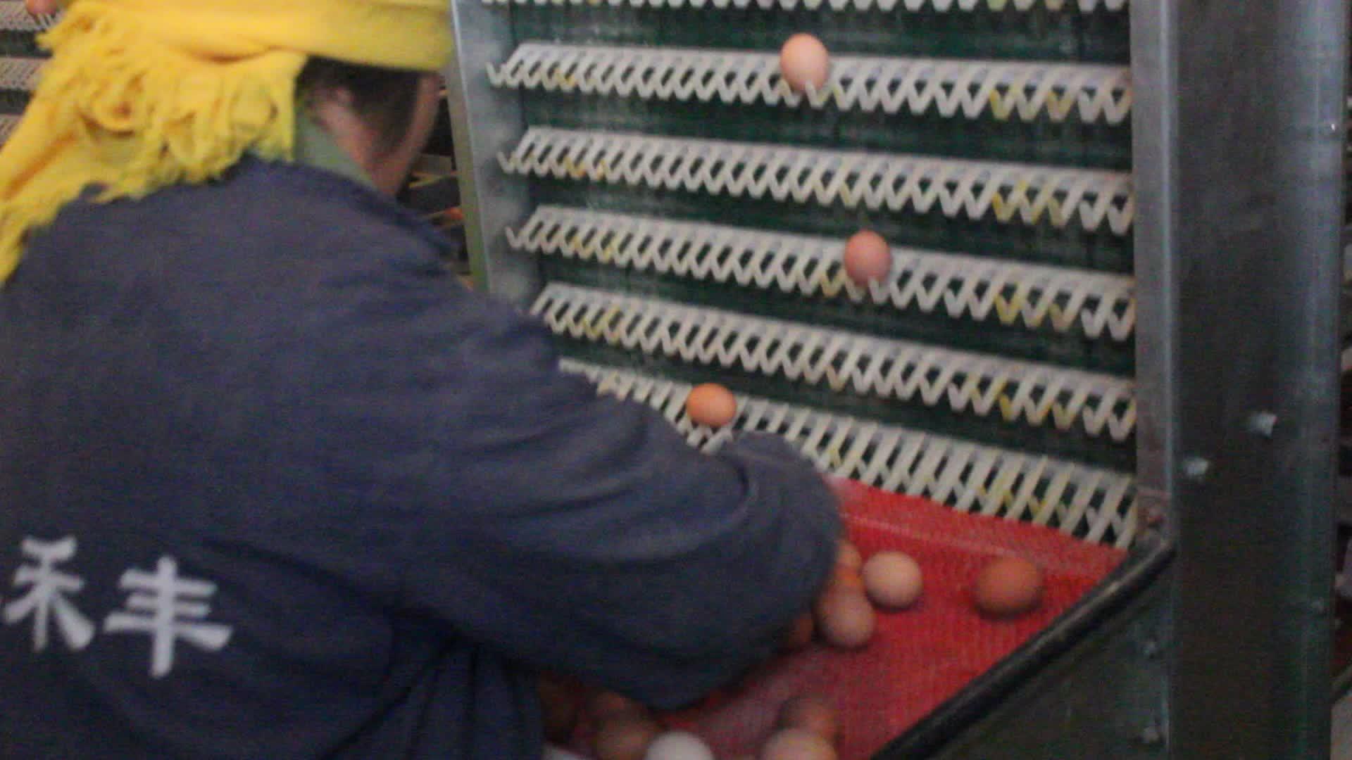 2020 Горячая продажа птицеферм несушек используется слой батареи клетка для курицы