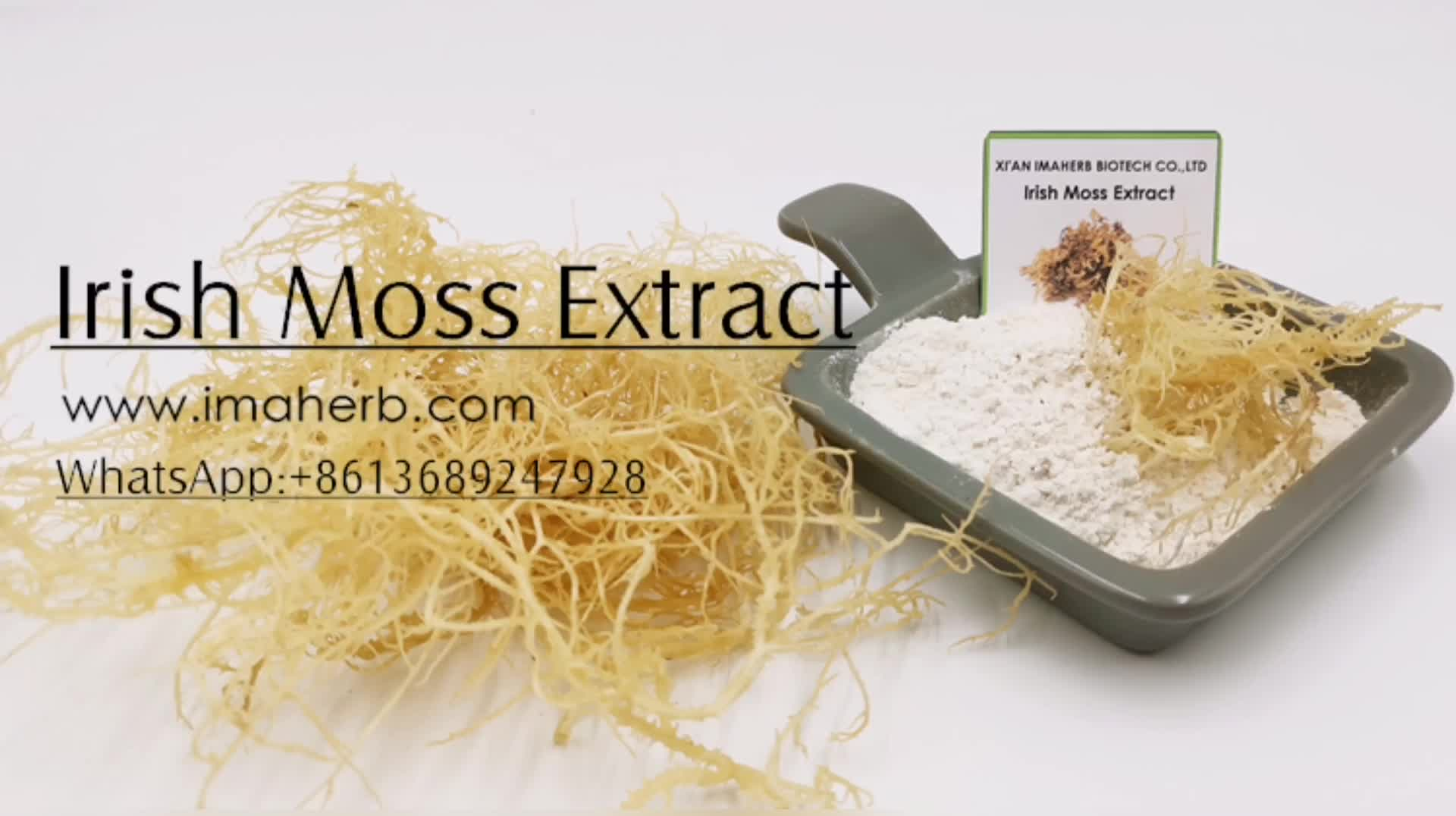 100% Natural Manufacturer seamoss powder For Health Product