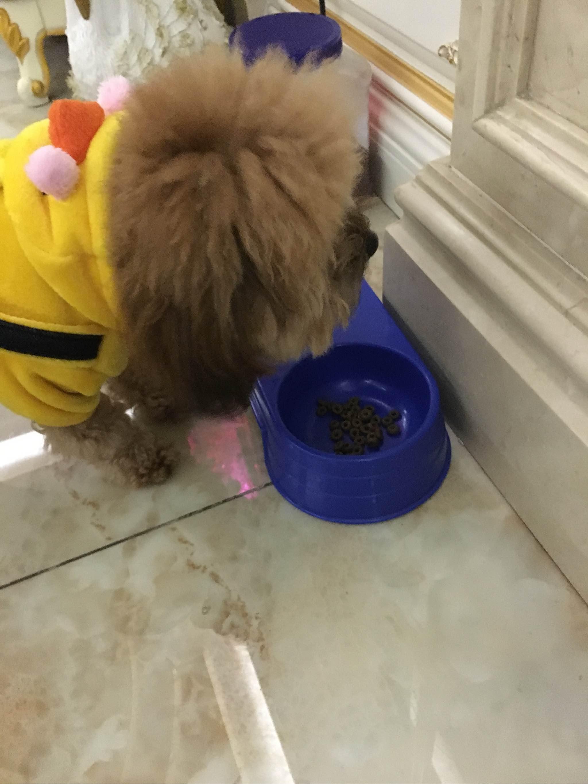 崂山矿泉水制作的甜甜圈狗粮,我家狗吃了后其它牌子都不吃了