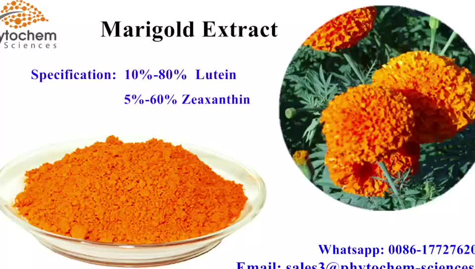 factory bulk price Marigold flower extract lutein and zeaxanthin powder lutein