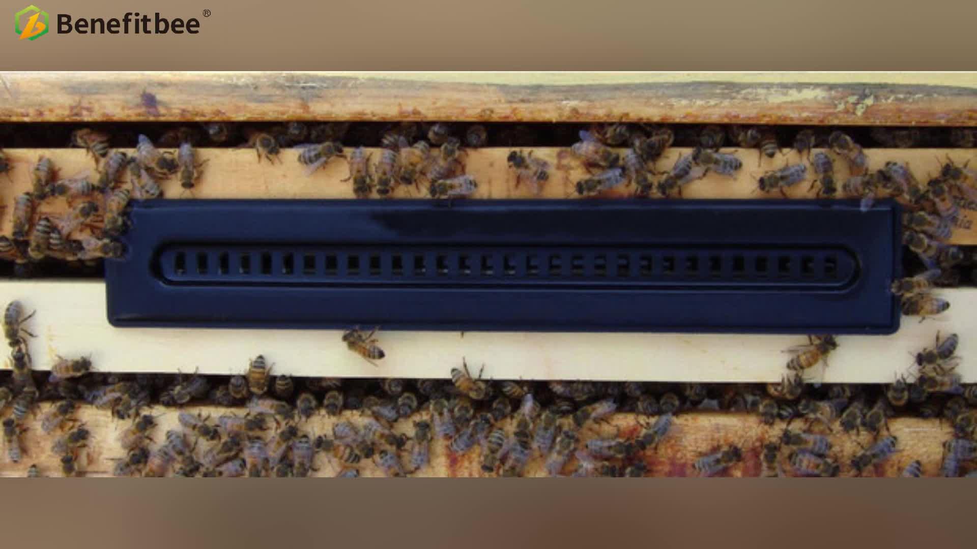 Bienenzucht hive käfer falle Insekten Falle
