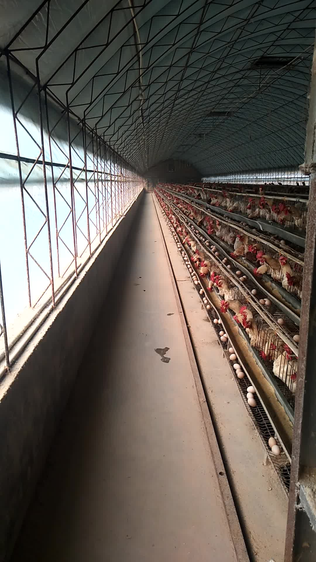 Low price battery egg chicken farm cages laying hens