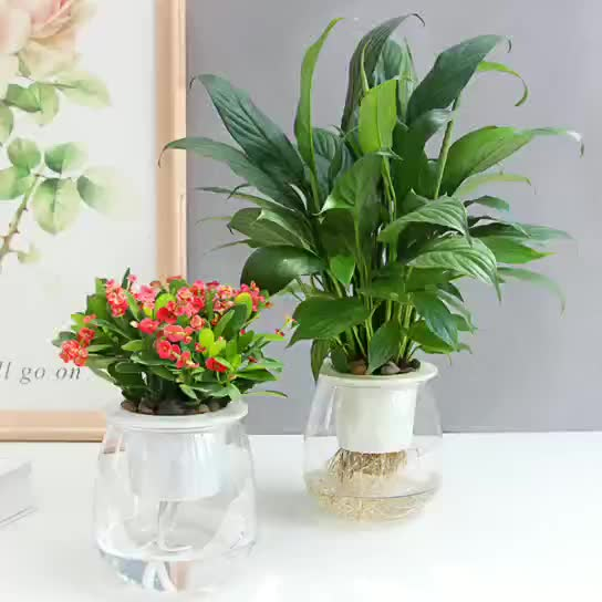 High-transparent basin hydroponic green plant indoor flower potted office desktop small potted plant