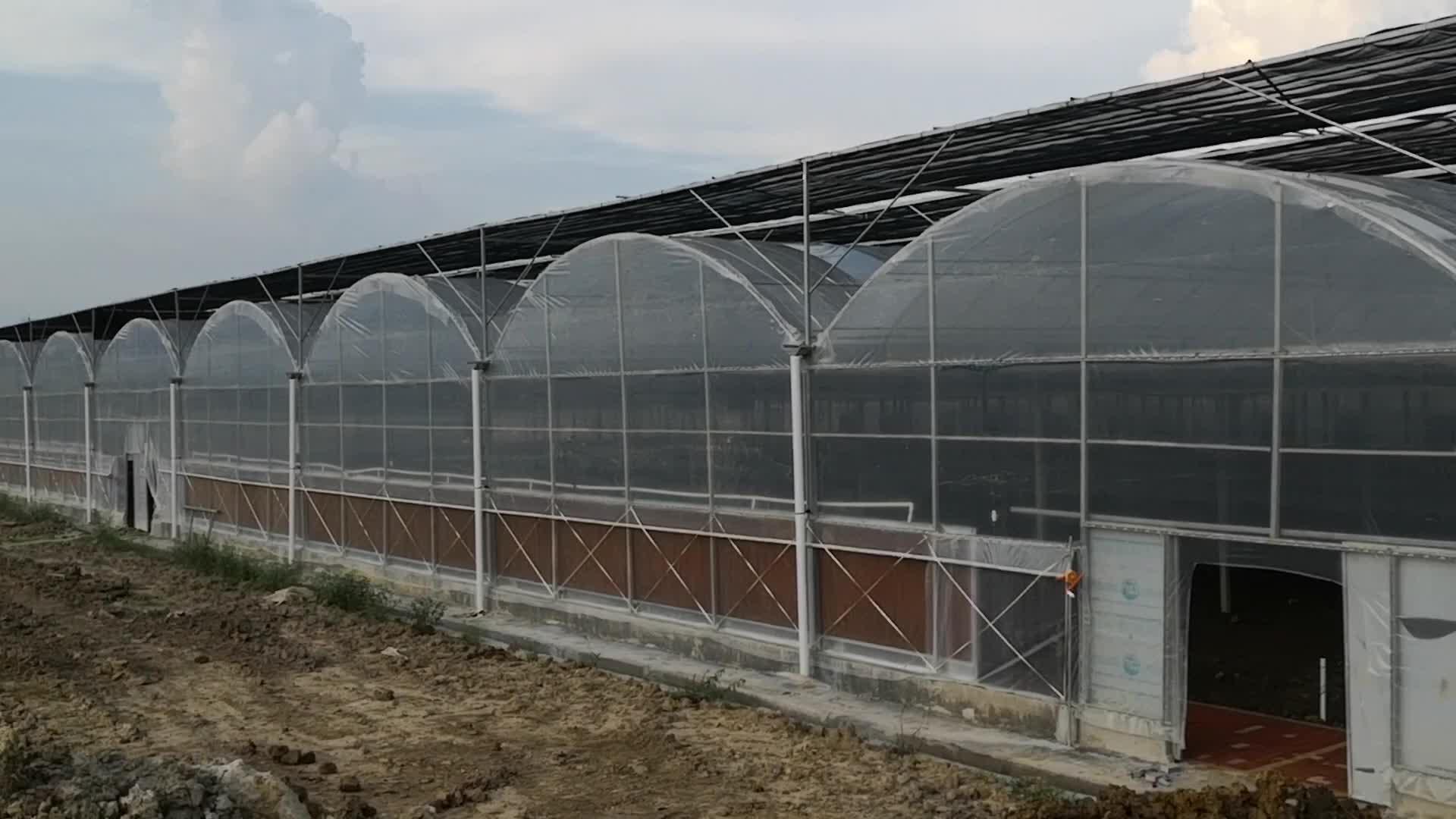 Quản Lý Tự Động Multi-span 200mic 150mic Độ Dày Màng Nhựa Hệ Thống Thủy Canh Nhà Kính Đối Với Cà Chua Paprika