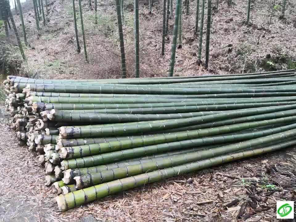 Milieuvriendelijke Bamboe Zout en Kruidenrek met 6 Jar Flessen