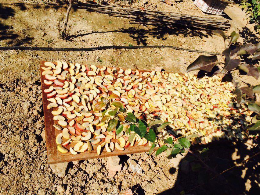 曹明蟒山苹果采摘园