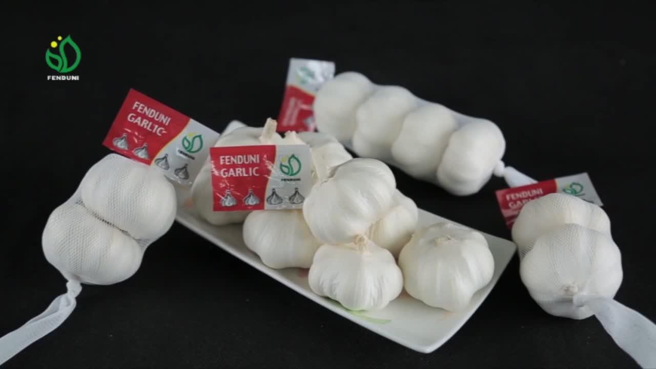 की आपूर्ति ताजा चीनी सफेद लहसुन नई फसल Bawang Putih में कम कीमत