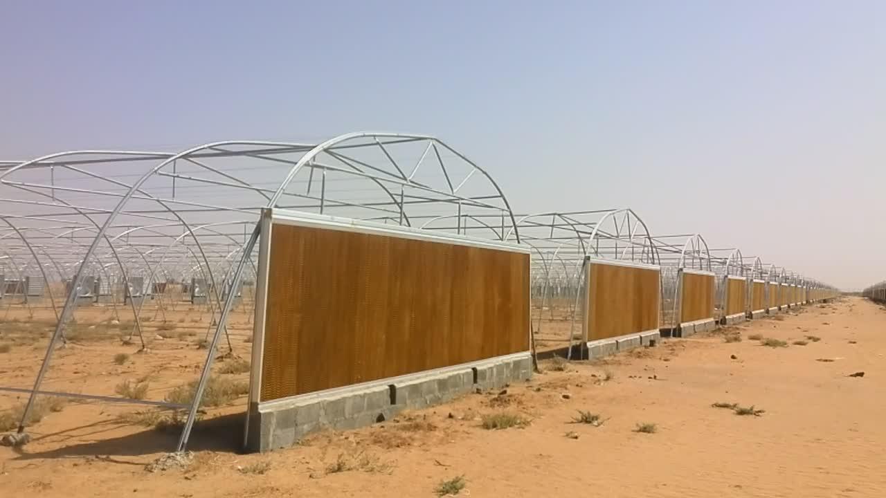 9 メートルシングルトンネル 200 300micron プラスチックフィルムトマト温室中東