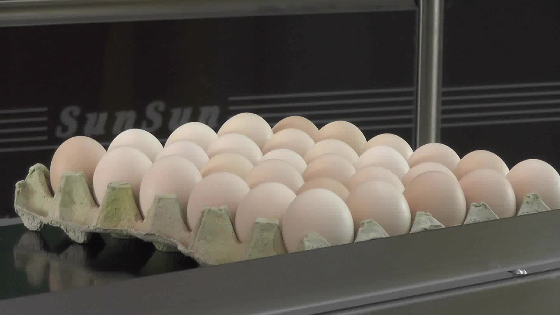 Cost-efficient And Eco-friendly Egg Inkjet Printer