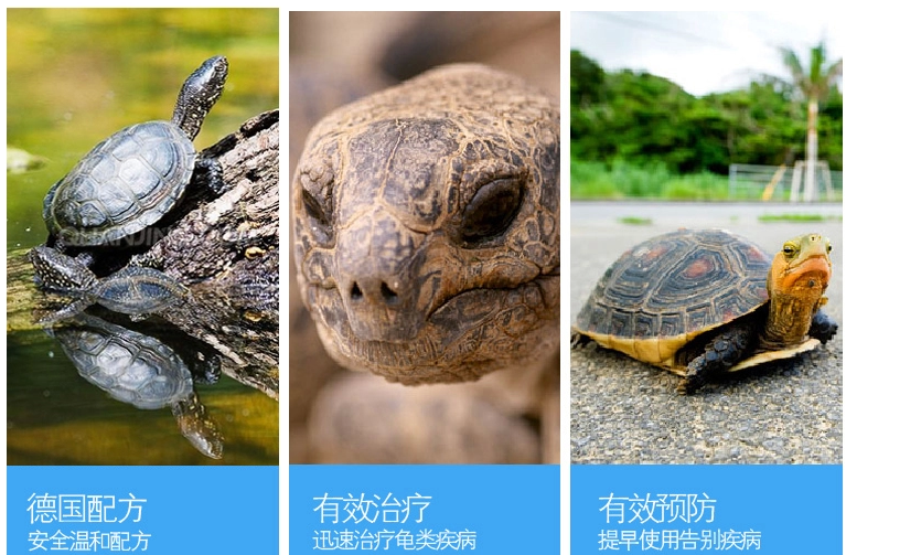 Guard turtle liquid turtle water liquid turtle tortoise white eye eye  swollen meat rotten armor antiseptic skin disease turtle wound infection  turtle