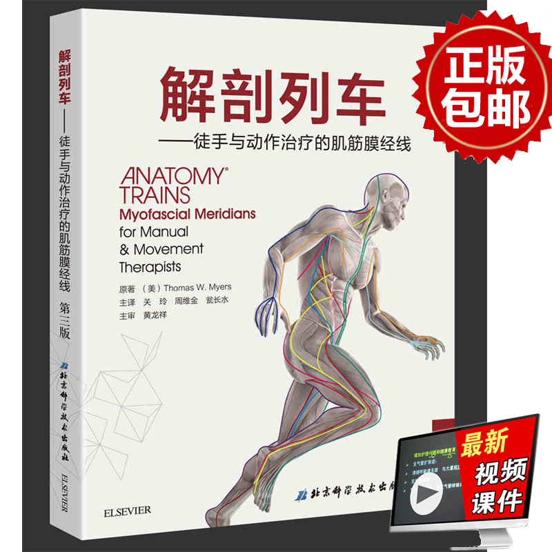 Genuine Anatomy Train Muscle Fascia Meridian for Hand and Action The ...