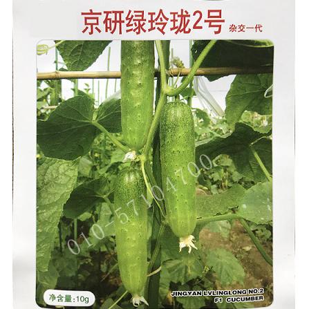 京研绿玲珑2号黄瓜种子 旱黄瓜种子
