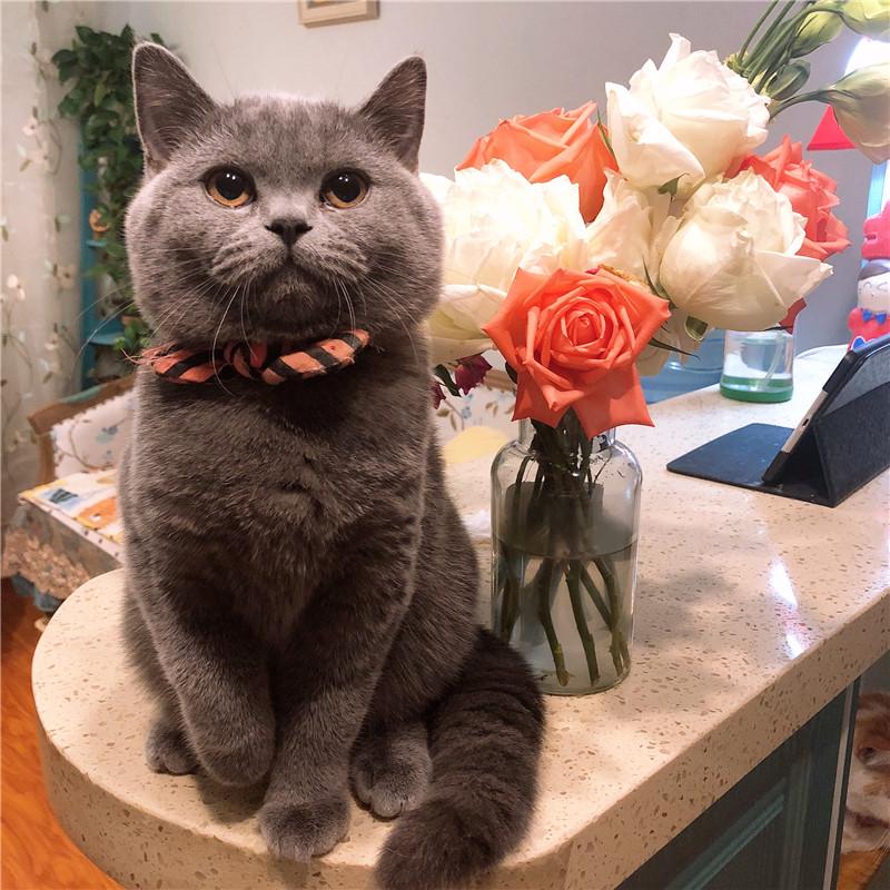 Xuất khẩu sang Hàn Quốc Sọc Bow Cat Cổ áo Dog Bow Tie Pet Vòng cổ Net Red Bell Điều chỉnh vòng cổ - Cat / Dog hàng ngày Neccessities