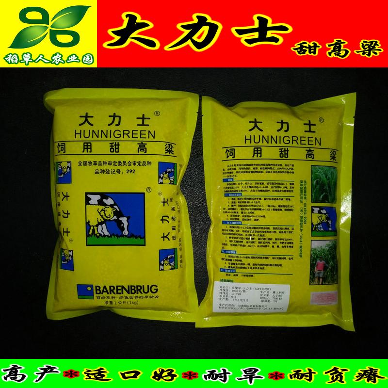 大力士甜高粱种子 百绿集团进口 配资料保正宗 附实物照 饲用牧草
