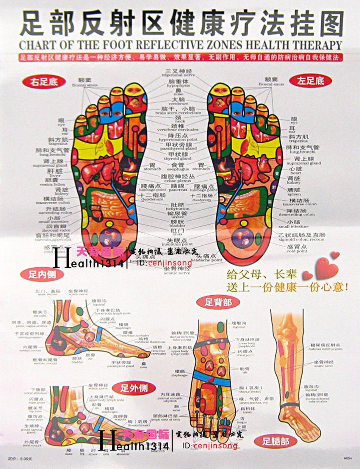 杨奕足底按摩穴位图_足部反射区健康疗法挂图/中英文正版 足底穴位图 人体穴位图 家用