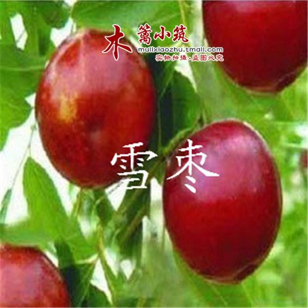 【台湾蜜枣北方种植】