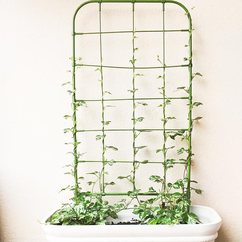 庭院盆栽植物爬藤花架喇叭花攀爬网格架子造型花园艺可支架花屏